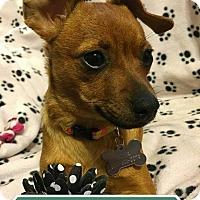 Adopt A Pet :: Cutie Pie - Georgetown, KY