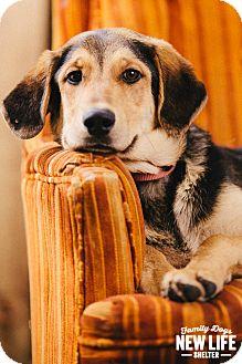 German Shepherd Dog/Coonhound Mix Dog for adoption in Portland, Oregon - Harley
