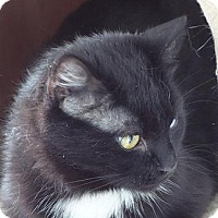 Adopt A Pet :: SERENITY - SuperSweetie 25.00 - Rochester, NY
