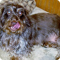 Adopt A Pet :: VADER - Riverside, CA