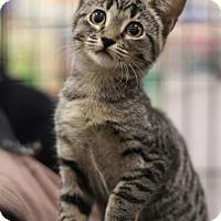 Adopt A Pet :: Yvette - Sacramento, CA