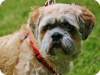 Lhasa Apso Mix Dog for adoption in Carlsbad, California - Elmo