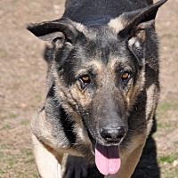 Adopt A Pet :: Comet - Dripping Springs, TX