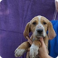 Adopt A Pet :: Suzi - Oviedo, FL
