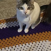 Adopt A Pet :: Mimi C1716 - Shakopee, MN