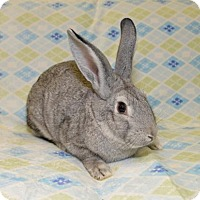 Adopt A Pet :: Drew - Chesterfield, MO