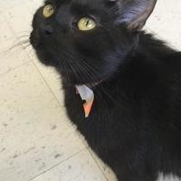 Adopt A Pet :: Lynn - Grand Island, NE