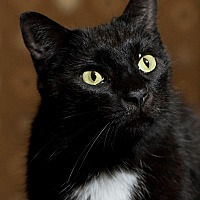 Adopt A Pet :: Felix - Colfax, IA