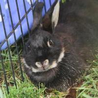 Adopt A Pet :: Anna - Bowling Green, KY