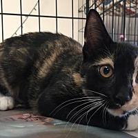 Adopt A Pet :: Cora 2 - Pendleton, NY