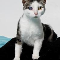 Adopt A Pet :: LANNA - Gloucester, VA