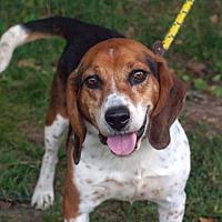 Adopt A Pet :: Timmy: in Fairfax - Cincinnati, OH