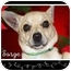 Photo 1 - Chihuahua Mix Dog for adoption in San Clemente, California - SARGE