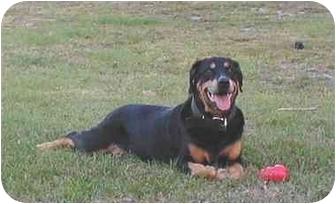 Rottweiler Dog for adoption in Austin, Texas - Abby