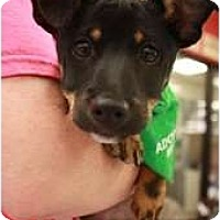 Adopt A Pet :: Malcolm - Arlington, TX