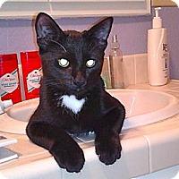 Adopt A Pet :: Bugs - Lafayette, CA