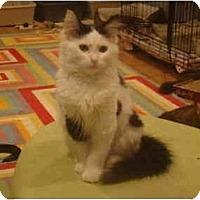 Adopt A Pet :: Dandy--PETSMART - Muncie, IN