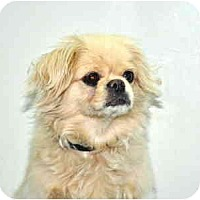 Adopt A Pet :: Mei Mei - Port Washington, NY