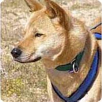 Adopt A Pet :: Dongji (DJ) - Southern California, CA