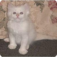 Adopt A Pet :: Einstein - Franklin, NC