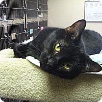 Adopt A Pet :: Torx - St. Petersburg, FL