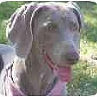 Adopt A Pet :: Chloey  **ADOPTED** - Eustis, FL