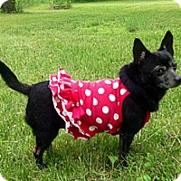 Adopt A Pet :: Piglet - Osseo, MN