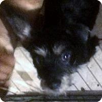 Adopt A Pet :: WIMPY - Riverside, CA