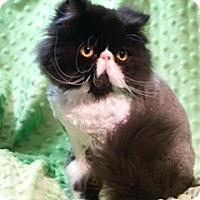 Adopt A Pet :: Fiona - Columbus, OH