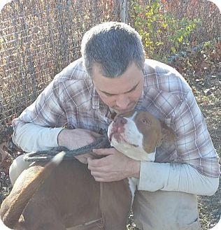 Pit Bull Terrier Mix Dog for adoption in Cranston, Rhode Island - Brody