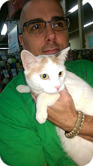 Domestic Shorthair Cat for adoption in Ogden, Utah - Opal