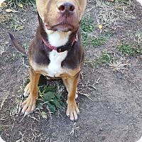 Adopt A Pet :: Reeses - Fort Riley, KS