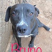 Adopt A Pet :: Bruno - Blakely, GA