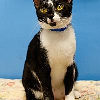 Adopt A Pet :: Terrie - oakland park, FL