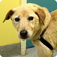 Adopt A Pet :: Pixie - Richmond, VA