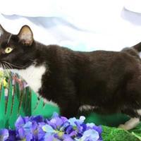 Adopt A Pet :: Gere - Harrisonburg, VA