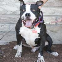 Adopt A Pet :: Jensen - Fresno, CA