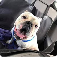Adopt A Pet :: Otis - Allison Park, PA