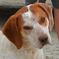 Adopt A Pet :: Luke - Sturbridge, MA