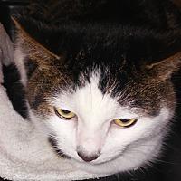 Adopt A Pet :: Tina - oakland park, FL