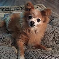 Adopt A Pet :: Baby - Troutville, VA