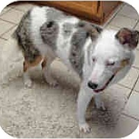 Adopt A Pet :: Promise - Mesa, AZ