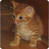 Adopt A Pet :: Golden Litter - Richfield, OH