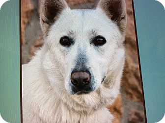 German Shepherd Dog Dog for adoption in Los Angeles, California - NATASHA VON NEU