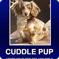 Adopt A Pet :: Sadie - Morrisville, PA