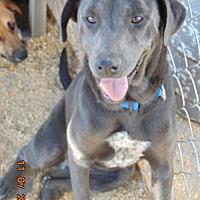 Labrador Retriever Mix Puppy for adoption in San Diego, California - Rosy