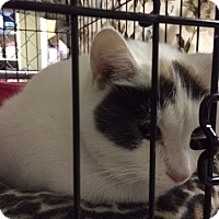 Adopt A Pet :: Eaglet - Byron Center, MI