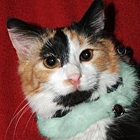 Adopt A Pet :: Miss Charlie - Encino, CA