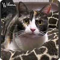 Adopt A Pet :: Wilma - Gilbert, AZ