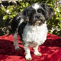 Adopt A Pet :: Nelson--- S--VIdeo - Santa Fe, TX